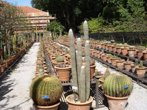 Plants in serried ranks at Orto Botanico