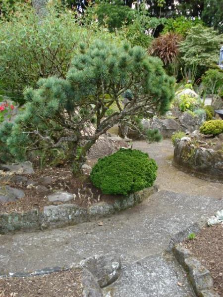 The refurbished rockery looks a little barren in places but below the mulch are many bulbs waiting to spring into fresh growth