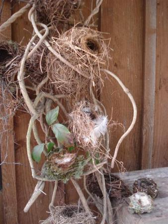 The growing collection of birds's nests