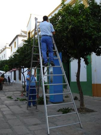 Clipping the street plantings of orange trees to lollipops in Cordoba