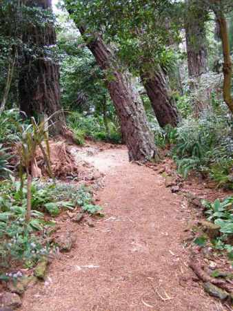 The allure of the woodland garden path
