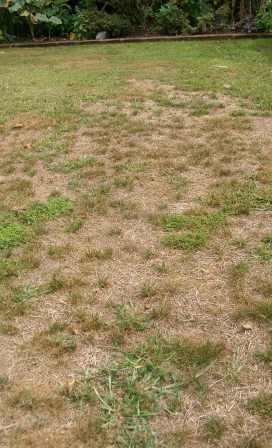 Time to think about lawn renovation