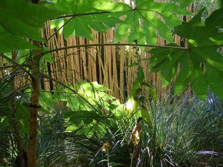 The combination of foliage and colours brings life to the Bamboo Forest