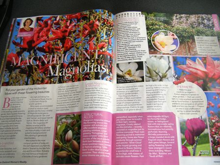 New Zealand Woman's Weekly on magnolias - Burgundy Star, Black Tulip and Fairy Magnolia Blush in the photos