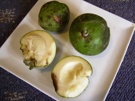 The white sapote - now a winter fruit staple here
