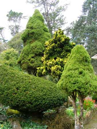 Most conifers don't seem to have an off-period but too few people want them in their garden these days