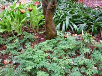 It is plant combinations, mixing and matching, that gives interesting detail to a garden