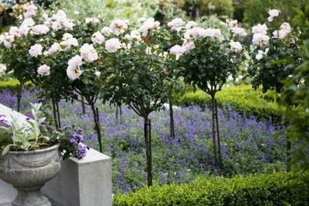 A modern take on the rose garden at La Rosaleda in New Plymouth (photo by Jane Dove Juneau)