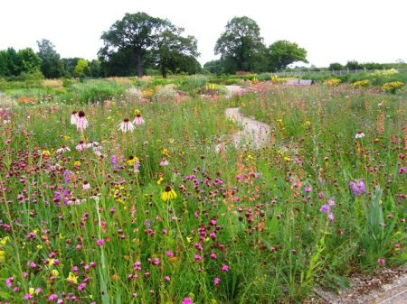 The Missouri Meadow Garden at Wisley - perhaps the pinnacle of the prairie garden style