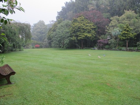 Wet pigeons, awaiting the erection of the wedding marquees on the front lawn this morning