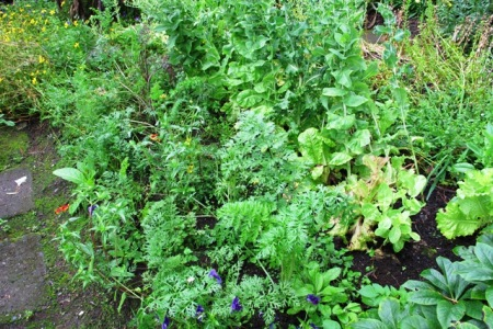 We are never going to get show vegetables out of our garden