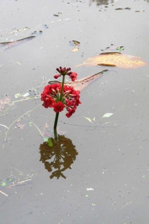It rained heavily earlier in the week - very heavily