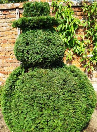 The call went out to UK gardeners for yew clippings. Yew snowman from Helmingham Hall