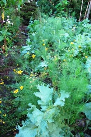 More meadow garden than potager here