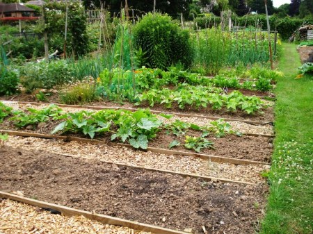 The conventional approach to vegetable gardens, though one hopes the timber sides are not tanalised