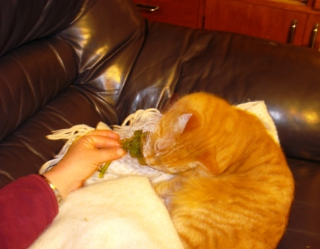 Buffy, the contrary cat, tries to convince us that kale is delicious