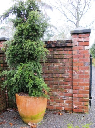 Large gardens need large pots - a weeping totara at our entranceway