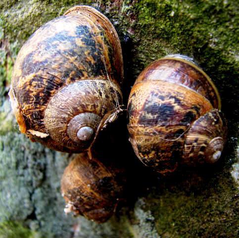6 Step Plan to Control Slugs