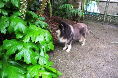 Zephyr beside the Acanthus mollis