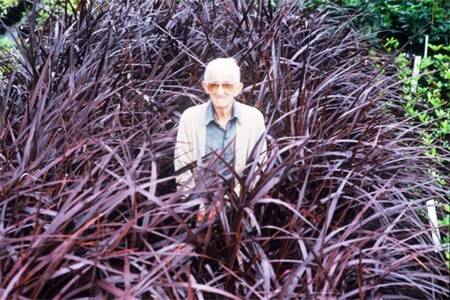 Father - Felix Jury (d.1997)  in a patch of Cordyline Red Fountain