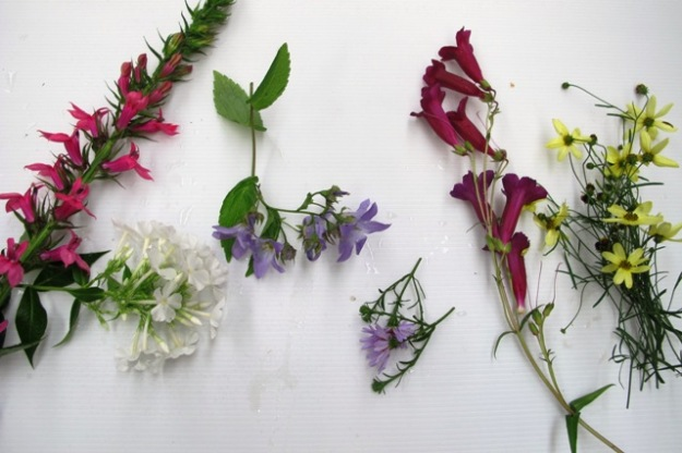 Lobelia, phlox, campanula, aster, pensetemon and coreopsis - all candidates for the Chelsea chop here