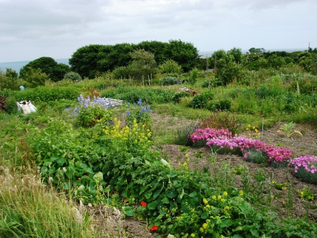 Allotments with a million pound view at Gerrans in Cornwall