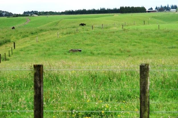 Typical farmland. Shame this is the site for Mangahewa E