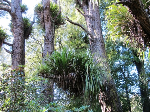 The rich tapestry epiphytes that has developed over many decades