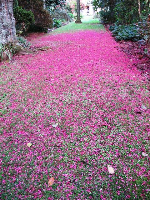 Petal carpets supreme