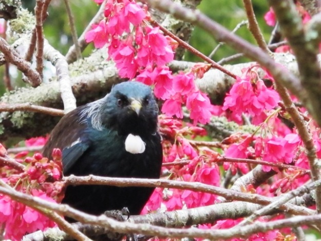 Manna from heaven for the tui
