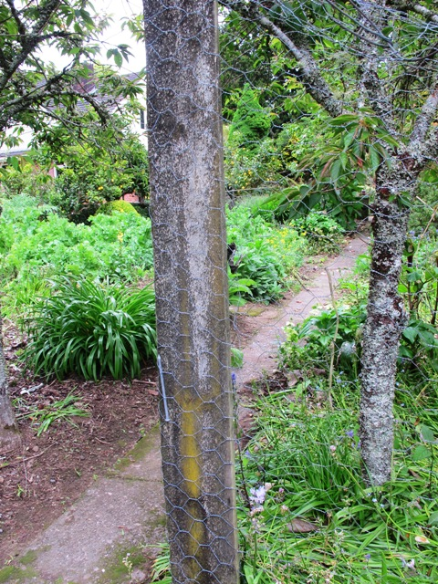 Our bean frame - it's hard to avoid tanalised pine in the veg garden
