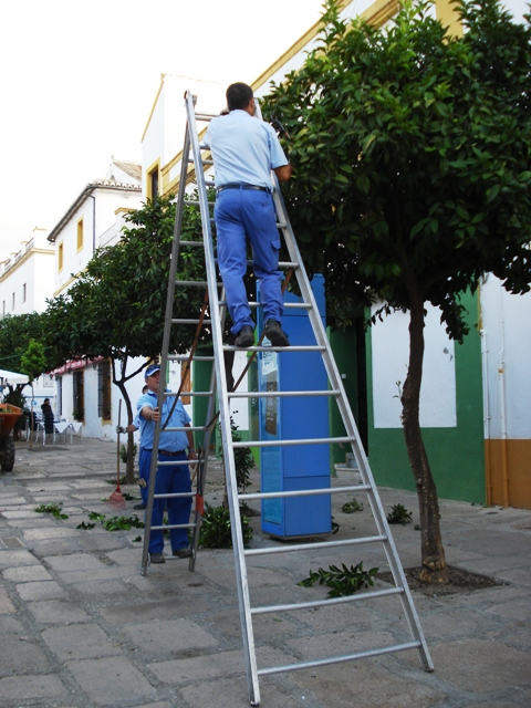 Street plantings of orange trees in Cordoba