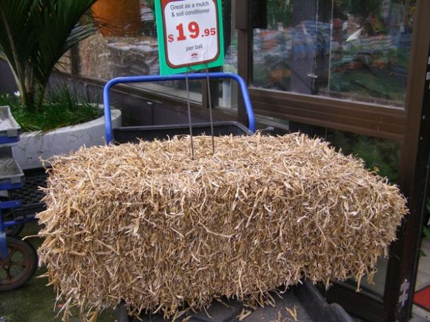 Pea straw may be a better option for the vegetable garden than the ornamental garden