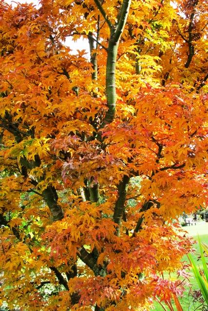Autumn colour supreme