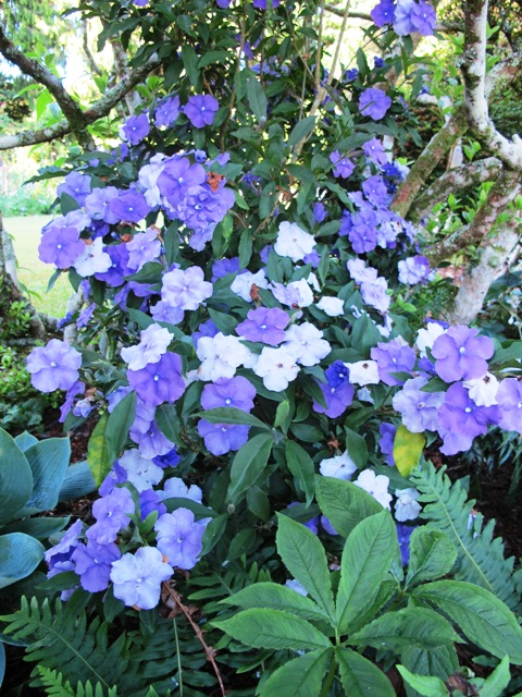 Brunfelsia, or the Yesterday Today Tomorrow plant, is highly toxic to dogs but fortunately few dogs eat flowers.