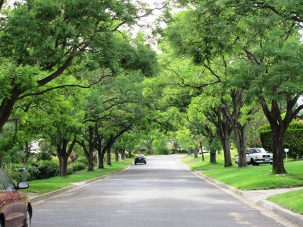 We could learn a thing or two from street trees in Australia - this pleasant leafy road is in in Canberra