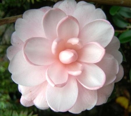 Camellia Mimosa Jury (Felix Jury)