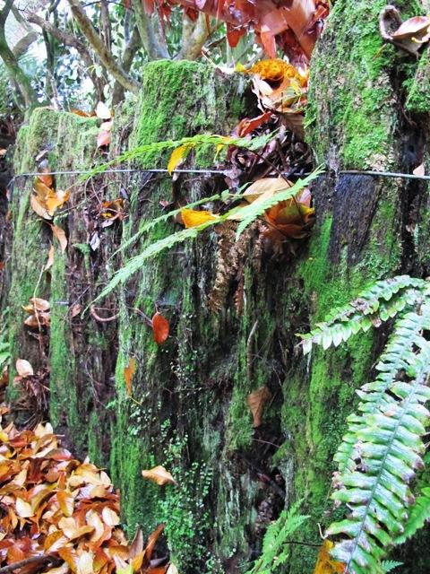 Garden lore: ponga retaining walls