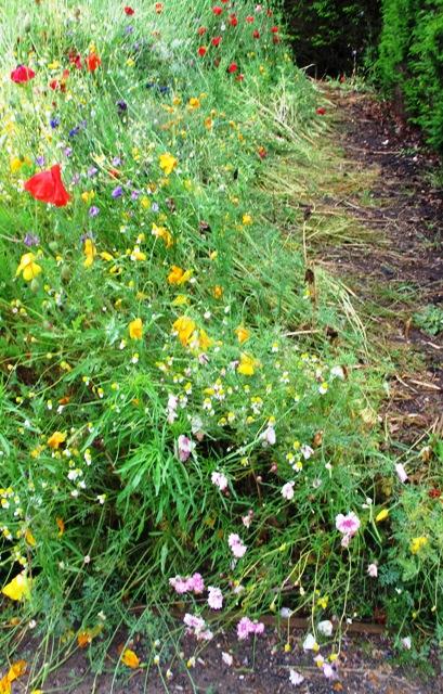 wildflower-rain-affected