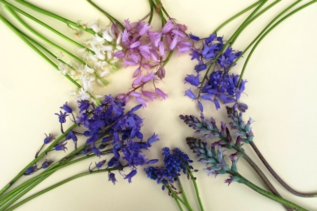 Bottom left, clockwise: Spanish bluebells in blue, white and pink, allegedly English bluebells, blue lachenalias and grape hyacinths – muscari – which some people mistakenly refer to as bluebells.