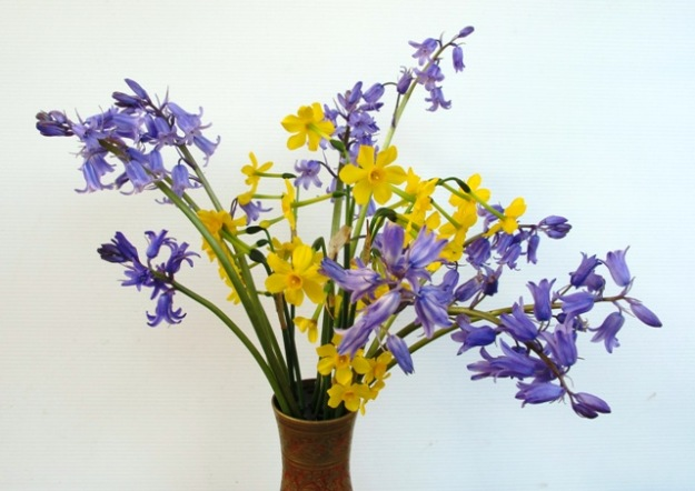 Bluebells and very fragrant jonquil species are both originally from Spain.