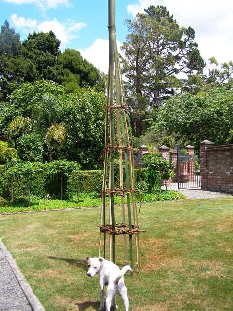 bamboo obelisks
