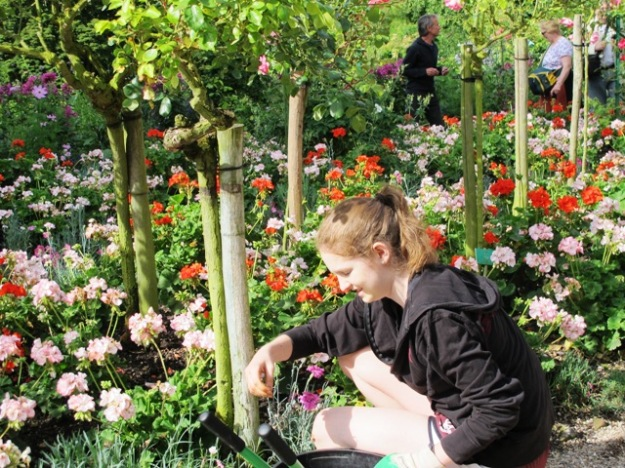 Almost Madonna-like in the garden, one of a small tribe of young women grooming the pelargoniums petal by petal