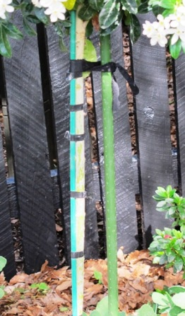 Plastic stakes and ties - never a good look