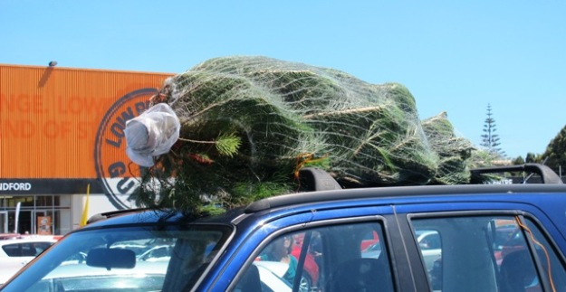 A southern Christmas – the pine tree on the SUV roof against a background of blue summer skies and orange Mitre 10.