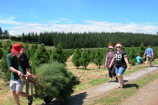 It was a hive of cheerful activity at the Christmas tree farm