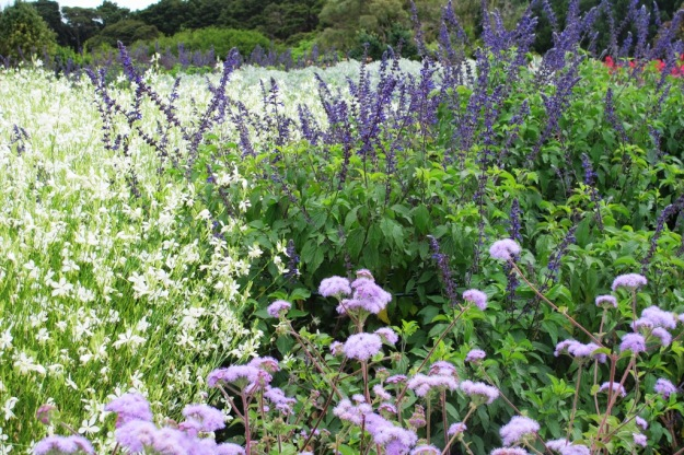 Eupatorium, salvias and gaura planted in generous swathes