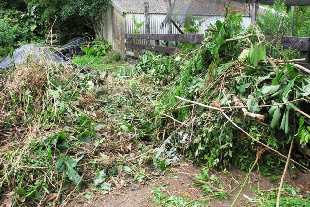 I have removed a prodigious amount of material - to the left for compost, to the right to be chipped and then composted