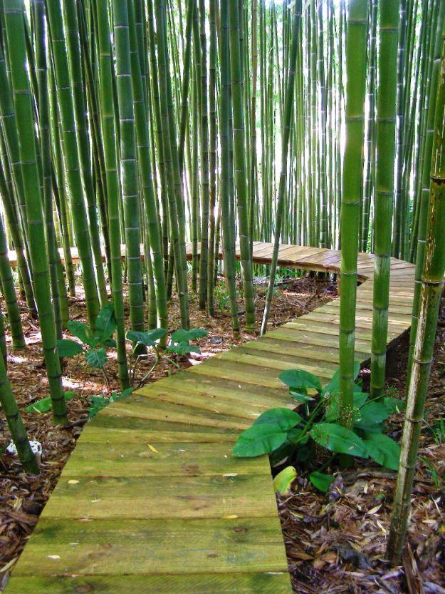 Paloma Gardens | Tikorangi The Jury Garden