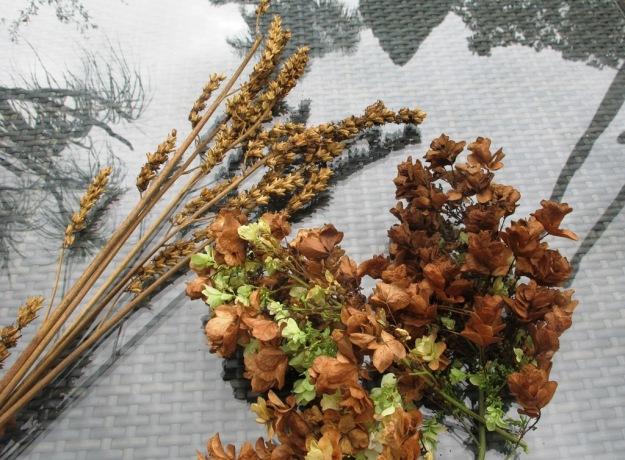 Francoa and Hydrangea quercifolia 'Snowflake'
